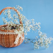 Постер, плакат: Gypsophila paniculata in the basket light airy masses of small