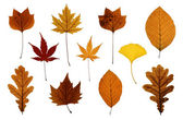 Set of Autumn Leaves Isolated on White — Stock Photo