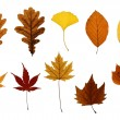 Collection of Autumn Leaves Isolated on White — Stock Photo