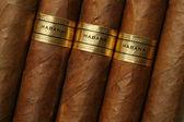 Havanna cigarrer konsistens — Stockfoto