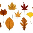 Set of Autumn Leaves Isolated on White — Stock Photo #13395308