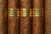 Havana Cigars Texture — Photo