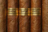 Textura de puros de la habana — Foto de Stock