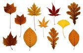 Set of Autumn Leaves Isolated on White — Stock Photo