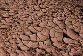 Cracked Dried Earth — Stock Photo