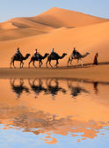 Camel Caravan in Sahara Desert — Stock Photo