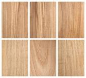 Rowan a popel strom dřevo textury — Stock fotografie