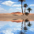 Palm Trees near the Lake in the Sahara Desert — Stock Photo #13494442