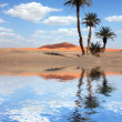Palm Trees near the Lake in the Sahara Desert - Stock Photo