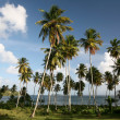 Caribbean Landscape — Stock Photo