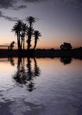 Palmiers près du lac au lever du soleil — Photo