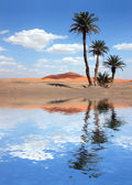 Palm Trees near the Lake in the Sahara Desert — Stock Photo