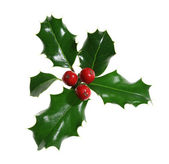 Holly Isolated on White — Stock Photo