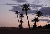 Palm Trees at Sunrise — Stock Photo