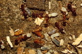 Ants save children — Foto Stock