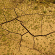 Foto de Stock  : Drought