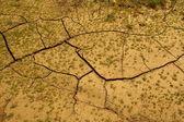 Dürre — Stockfoto