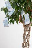 Albero con denaro — Foto Stock