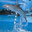 Spectacle with dolphins in barcelona's zoo — Stock Photo #35847837