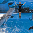 Spectacle with dolphins in barcelona's zoo — Stock Photo