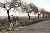 Retro-styled bicycle and almond trees in bloom — Stock Photo