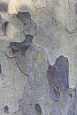 Textura de la corteza — Foto de Stock