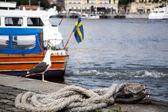 Måsen i stockholm — Stockfoto