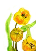 Tulips flowers, watercolor illustration — Stock Photo