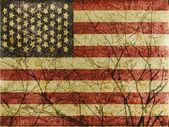 Amerikan kökleri — Stok fotoğraf