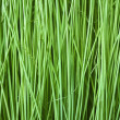 Stock Photo: Reeds Background Texture