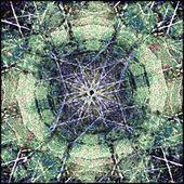 Symmetriska prydnadsväxter — Stockfoto