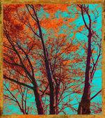 秋の木の構成 — ストック写真