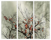 Triptych with natural motive — Foto de Stock