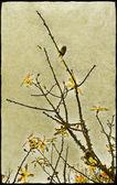 Natureza decorativa floral — Fotografia Stock