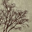Stock Photo: Tree Grunge Background