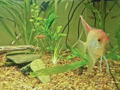 Fish Tank with three Fishes — Foto de Stock