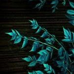 Dark Nature Leaves Background — Stock Photo #36781903