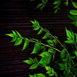 Dark Nature Leaves Background — Stock Photo