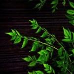 Dark Nature Leaves Background — Stock Photo #36781921