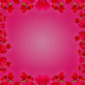 Flowers Frame Background — Stock Photo