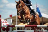 Equestrian Sports — Stock Photo
