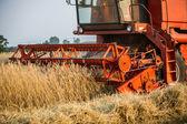 Harvesting — Fotografia Stock