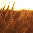 Dry grass at sunset — Vídeo de stock
