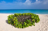 From Aruba, With Love — Stock Photo