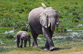 Elephant Family — Stock Photo
