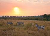 Sunset in the Savanna #3 — Stock Photo