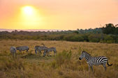 Sunset in the Savanna #2 — Stock Photo