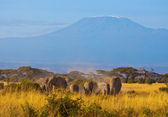 Kilimanjaro Elephants #2 — Stock Photo