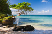 Perfect Beach, Dominican Republic — Stock Photo