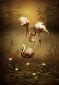 Pink flamingoes — Stock Photo